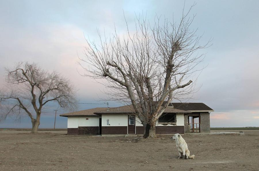 Animales Animales La crueldad sin fin de los criaderos ilegales de perros