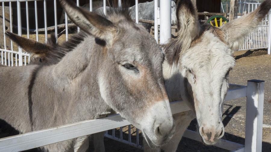 Animales Animales Planes para los verdaderos amantes de los animales