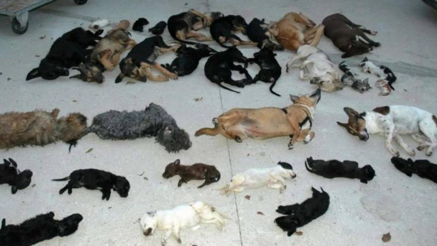 Animales Animales Así mató Carmen Marín a 2.183 animales en la perrera de los horrores de Torremolinos.