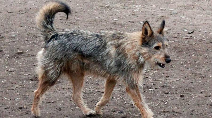 Animales Animales Miles de perros abandonados en Galicia con la nueva Ley de Bienestar Animal
