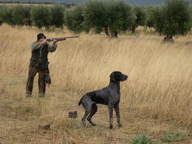 Animales Animales Los cazadores piden excluir a sus perros de las normativas de bienestar animal