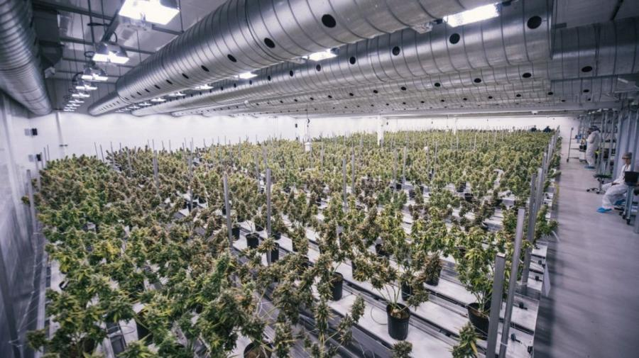 Actualidad Noticias El mayor productor de marihuana del mundo solicita cotizar en Wall Street