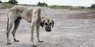Animales Animales Condenado a 10 meses de cárcel por matar a una perra tras lanzarla a una reja de metal