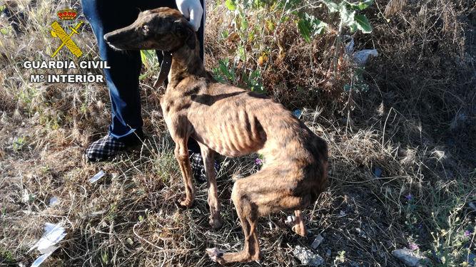 Animales Animales Investigan a los dueños de un perro hallado muerto y devorado por otros