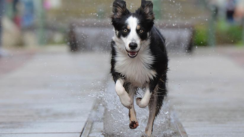 Animales Animales La felicidad de este perro que se zambulle en una fuente conquista a millones de usuarios