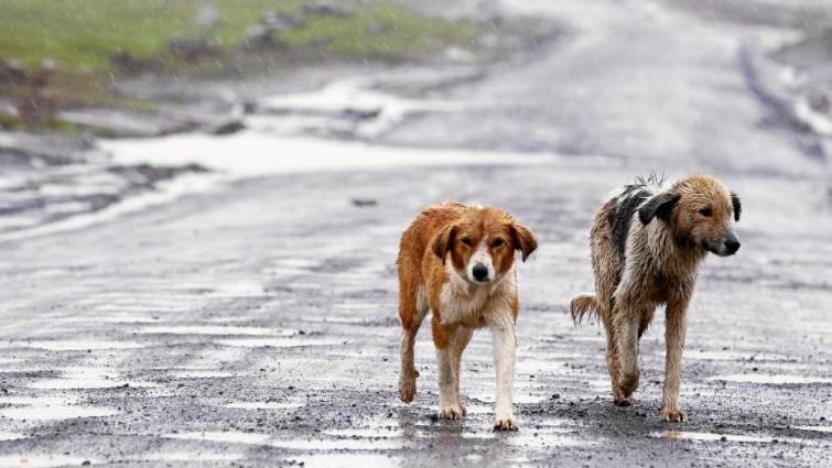 Animales Animales El abandono de perros y gatos vuelve a repuntar en España