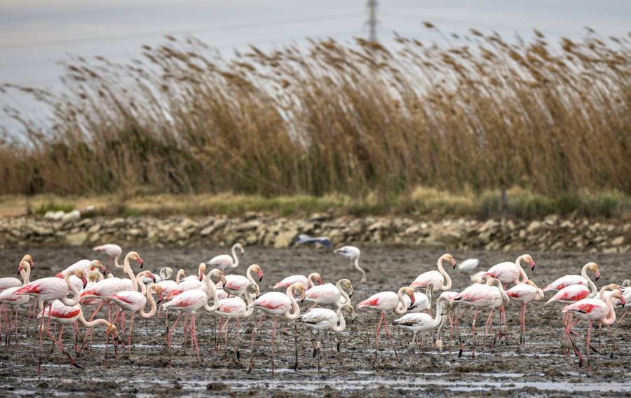 Animales Animales Las espectaculares escenas de aves que preludian una crisis ambiental
