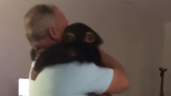 Animales Animales La emocionante reacción de un chimpancé al reencontrarse con sus cuidadores