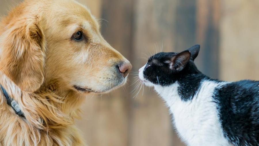 Animales Animales ¿Son los perros más inteligentes que los gatos?