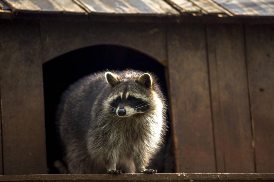 Animales Animales Aceite de cannabis para curar animales en Canadá