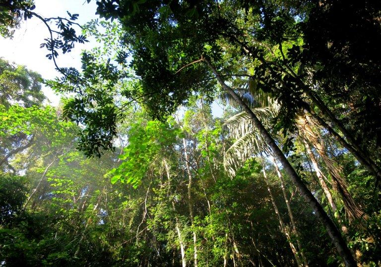 Ecologia Ecologia América Latina, región de alto riesgo para los ambientalistas