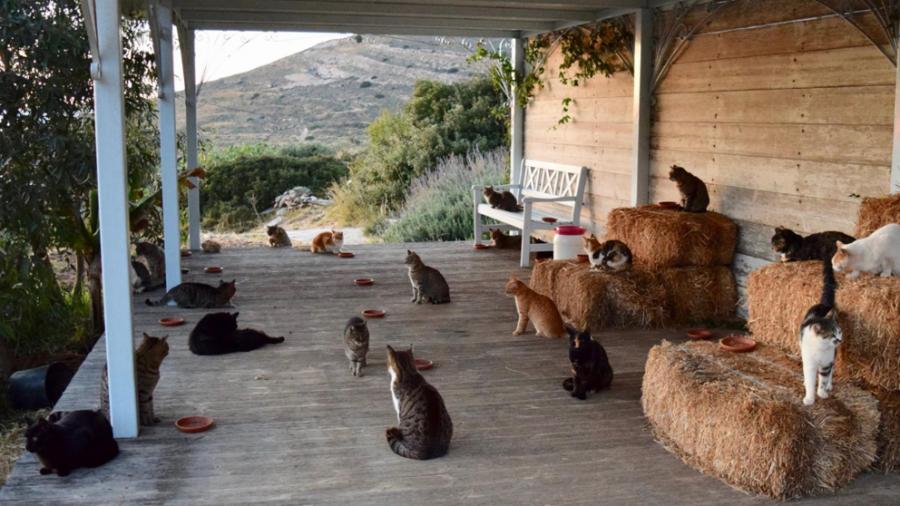 Animales Animales Vivir en una isla paradisíaca cuidando 55 gatos