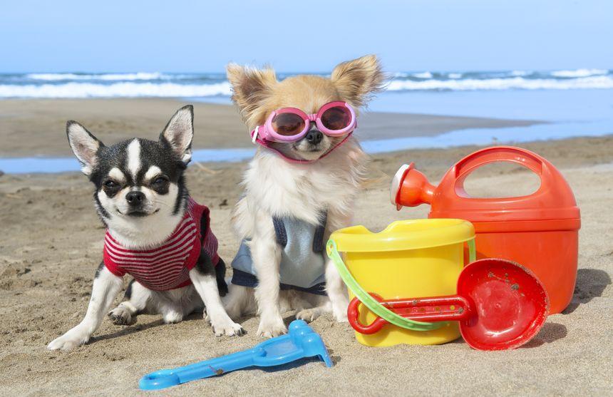 Animales Animales Éstas son las mejores playas dog-friendly para disfrutar con tu perro