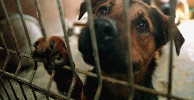 Animales Animales El abandono de animales aumenta de nuevo, con 138.000 recogidos por protectoras