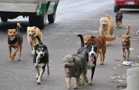 Torremolinos Torremolinos Ciudadanos exige al equipo de gobierno que actúe ante la presencia de perros sueltos en el aparcamiento del Centro Cultural Pablo Ruiz Picasso