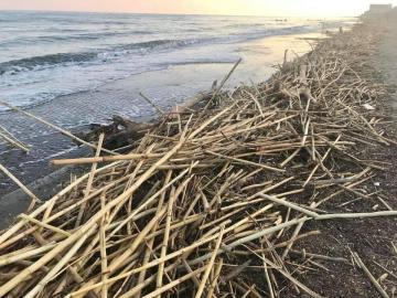 Torremolinos Torremolinos Ciudadanos lleva al próximo pleno la pasividad del equipo de gobierno en el cuidado de las playas de Torremolinos