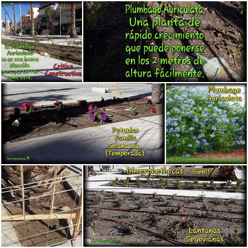 Torremolinos Torremolinos Critica constructiva de Torrenatura a las plantas y árboles que se han colocado en el centro peatonalizado de Torremolinos
