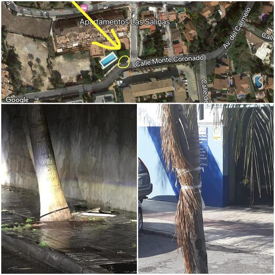Torremolinos Torremolinos El PP critica la vergonzosa dejadez en el mantenimiento de árboles en Torremolinos
