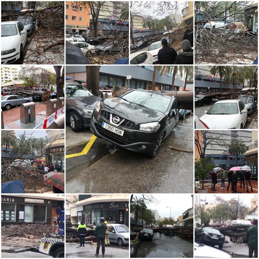 Torremolinos Torremolinos Una mujer herida con politraumatismos y varios vehículos aplastados, balance de la caída de un árbol de grandes dimensiones en la calle Cruz de Torremolinos