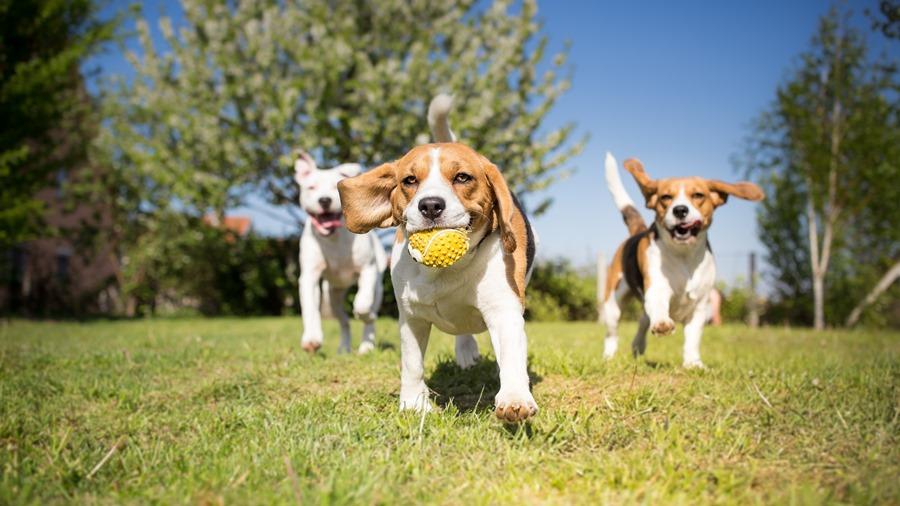 Animales Animales DogDay: el mejor lugar para disfrutar con tu amigo de cuatro patas está en Granada