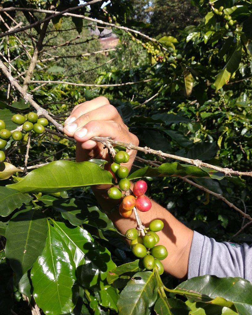 Salud Salud Crece el consumo de café de Comercio Justo en España