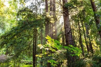 Ecologia Ecologia HP se asocia con WWF para la protección, restauración y mejora de la gestión de los bosques