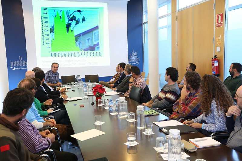 Ayuntamientos Ayuntamientos La Diputación coordina una actuación conjunta de los municipios para solventar el problema de las cotorras argentinas