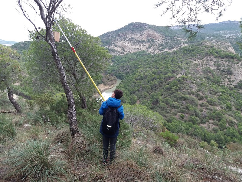 Ecologia Ecologia Escolares colocan 160 cajas nido para aves insectívoras en el entorno del Caminito del Rey
