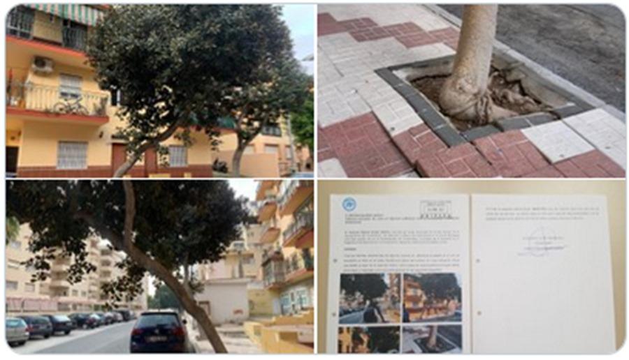 """Torremolinos Torremolinos Francisco Cerdán (PP): """"Pedimos a los técnicos que valoren la posible caída de un árbol en Avenida Sorolla que podría provocar daños humanos y materiales"""""""