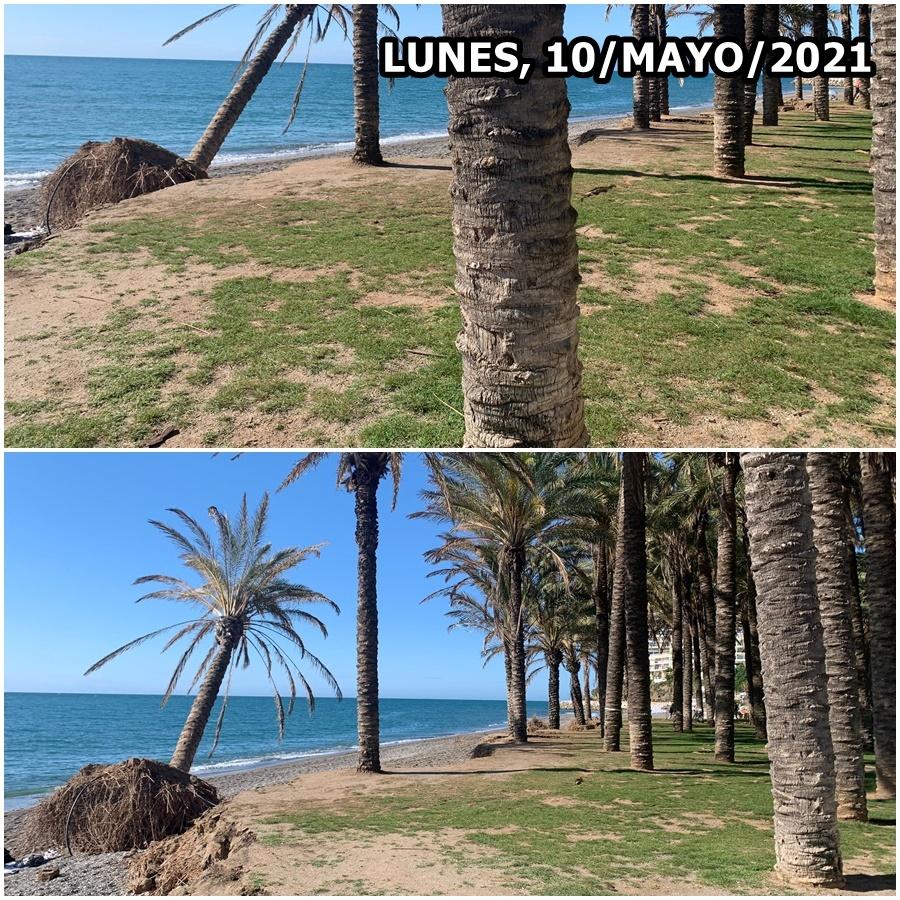 Torremolinos Torremolinos Por la ineficacia política, peligran los oasis costeros en Torremolinos