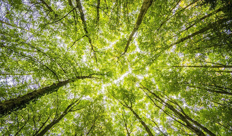 Ecologia Ecologia Andalucía, primera comunidad en poner en marcha el Plan de Acción por el Clima